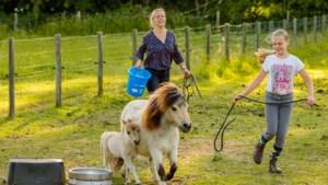 """Stal van de Molenweg vraagt dieren niet te voederen: """"Onze pony's kunnen erg ziek worden van al dat keukenafval"""""""