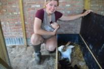120 inbeslaggenomen en intussen alweer bevallen konijnen wachten op nieuwe thuis