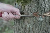 Moet bomenverminker De Liereman gezocht worden bij protestgroep De Zwarte Specht?