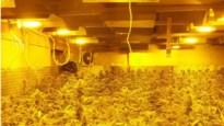 Professionele cannabisplantage ontdekt in oude hoeve, twee mannen opgepakt