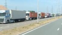 Ellenlange files op Scheldelaan in Antwerpse haven: truckers moeten aanschuiven door coronamaatregel