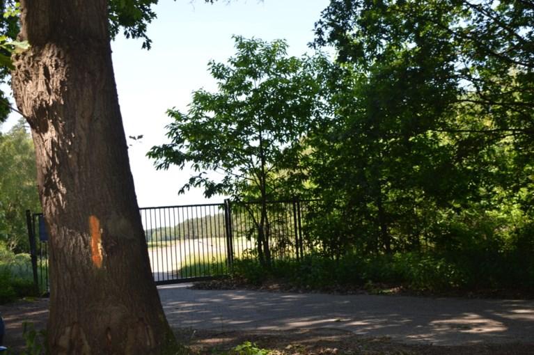 Gemeente wil 63 laanbomen in Blommerschot kappen omdat ze ziek zijn