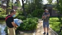 Brandweer bevrijdt populaire eend uit benarde situatie