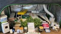 Dealers met eigen cannabisplantage opgepakt