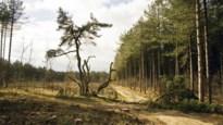 Ontdek deze vijf bijzondere bomen in de Kempen