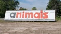 """Bekend graffitiwerk wacht op onzeker lot: """"Misschien heeft het Middelheimmuseum wel een plaatsje vrij?"""""""
