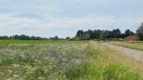 Nijlen laat het gras maar groeien: voortaan minder maaibeurten