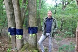 Goede hoop voor 101 Lieremanbomen, maar een op de zes toegetakelde exemplaren haalt het niet