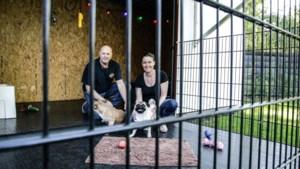 Een hondenhok gemaakt van een container: kijk binnen bij Moppy en Bulleke