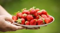 5 x snoepen van aardbeien in de Kempen: hoe meer, hoe liever