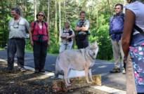 Onze reporter trekt met Jan Loos op wolvenwandeling door de Kempen