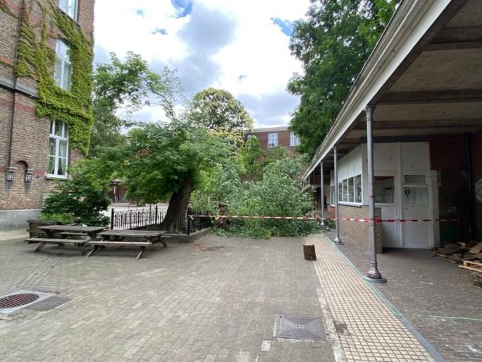 Leraar gewond nadat bijna 100 jaar oude boom deels naar beneden komt