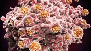 Waarom antilichamen toch niet zo betrouwbaar zijn