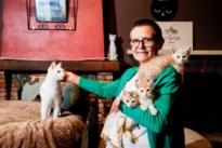 """Opvangcentra overspoeld met jonge katjes, ondanks sterilisatieplicht: """"Het is een horrorjaar"""""""