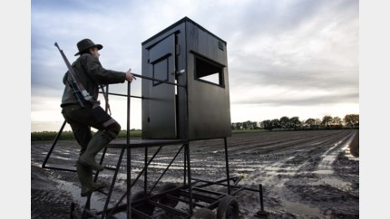 Het is al vier jaar verboden, maar jachtwachter probeerde toch honderd tamme fazanten uit te zetten voor klopjacht