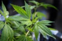 Drugskoerier betrapt met bijna 6 kilogram cannabis