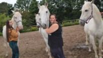 Italiaans paardencircus strandt in Zandhoven en geeft extra tintje aan kinderkampen