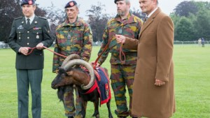 Stad schenkt nieuwe bok aan legereenheid: Modest XII