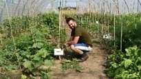 """Bioboer Jeroen van Onzen Hof: """"Het is hard werken, maar ik heb nog geen minuut spijt gehad"""""""