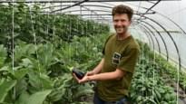 """Biolandbouwer Jelle Delanoeije: """"De smaak van een tomaat uit volle grond is tien keer beter dan die van één op hydrocultuur"""""""