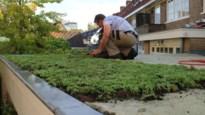 Arnhem wil afkoelen: Nederlandse stad neemt maatregelen tegen klimaatopwarming