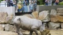 """Drie medewerkers Antwerpse Zoo testen positief op coronavirus: """"Geen gevaar voor bezoekers"""""""
