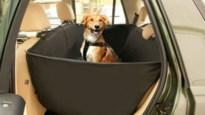Hondje half uur opgesloten in hitte van auto