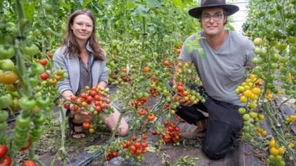 Eigen groentjes eerst: zelfpluktuin ziet aantal klanten verdubbelen door corona