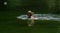 Openluchtzwembaden en zwemvijvers werken met tijdsblokken