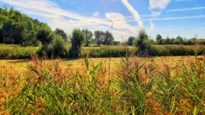 VITO meet luchtkwaliteit: resultaten worden gebruikt om visie uit te werken