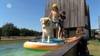 """Wim bouwde samen met zijn zonen zelf een """"zwevend zwembad"""" van 18 meter lang"""