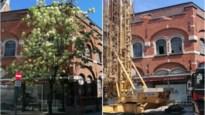 Boom in binnenstad illegaal gekapt voor plaatsen torenkraan