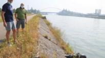 """Grondwaterpeil dramatisch laag door lek in Albertkanaal: """"Kersenboom is al gestorven"""""""