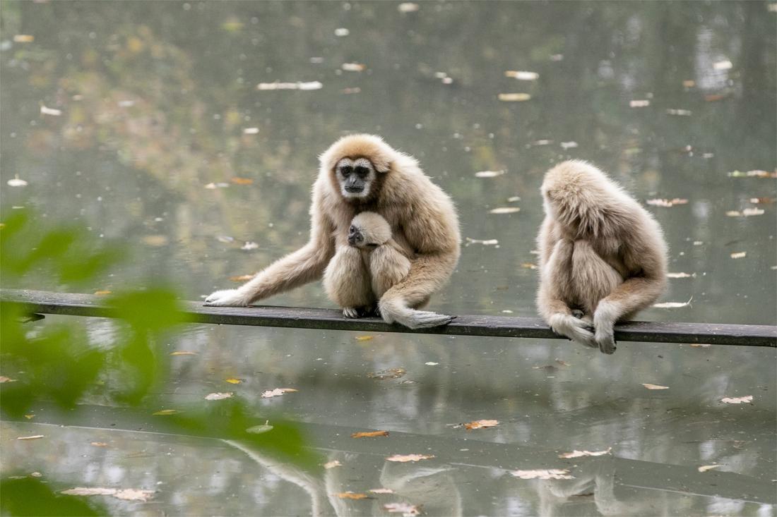 """Achter de schermen van een leeg Pakawi Park: """"De aapjes missen de bezoekers hard"""""""