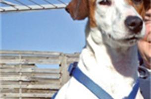 Hondje 15 km meegesleurd onder auto