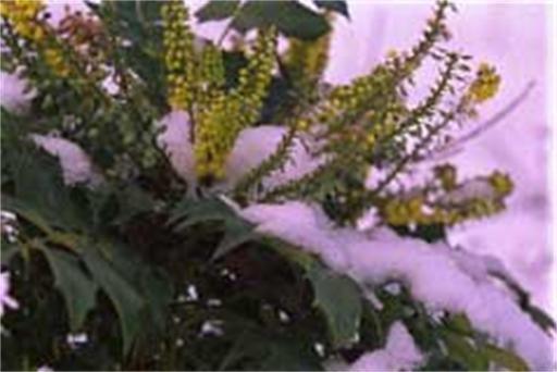 Geef Koning Winter geen kans in uw tuin