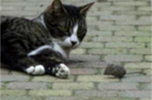 Angst van muis voor kat kan uitgeschakeld worden