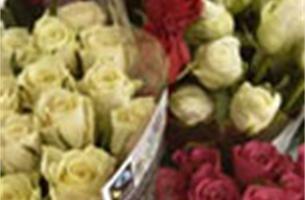 Max Havelaar pleit voor eerlijke valentijn