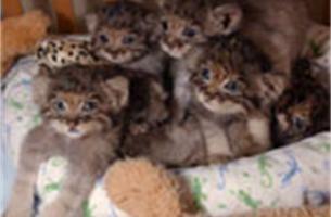 Jagers mogen geen katten meer doodschieten vanaf 2010