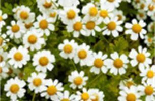Fietsen langs bloemen