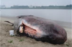 Mensen geloven écht in aangespoelde potvis   Foto's