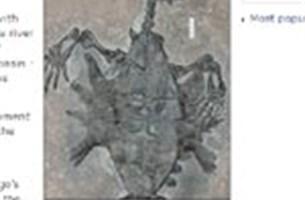 Schildpadden hadden vroeger enkel schild aan onderkant