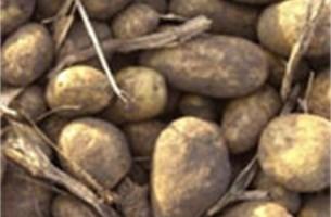 Financiële crisis doet Belgen aardappelen verslinden