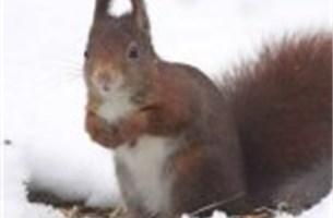 Bekijk hier alle ingezonden sneeuwfoto's!
