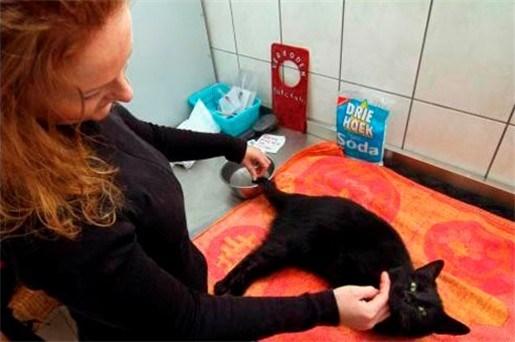 Bungeneers wil euthanasiecommissie voor dieren