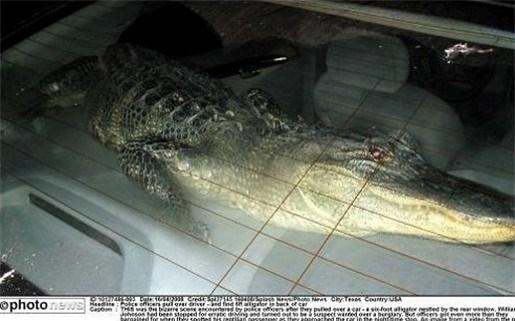 Resten 5-jarig kind gevonden in maag krokodil