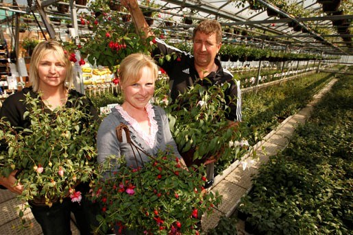 Kweker uit Nieuw-Zeeland komt fuchsia's in Koningshooikt kopen