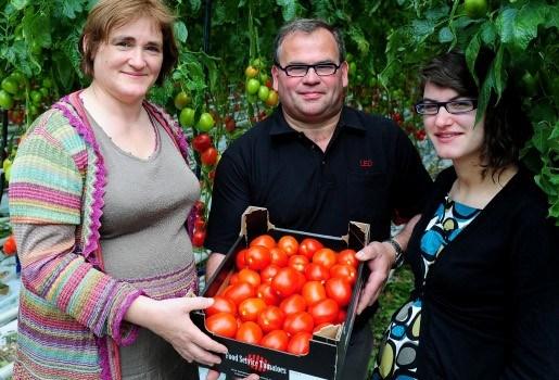 Tuinbouwer uit Broechem teelt lekvrije tomaten