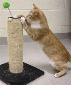 is een kattenhotel overbodige luxe