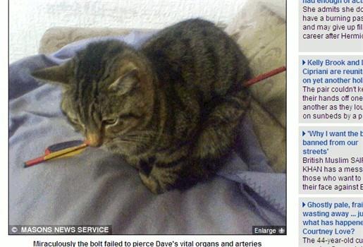 Kat loopt week rond met pijl door zijn lichaam